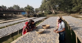 ব্যস্ততা বেড়েছে দুর্গাপুরের শুঁটকিপল্লিতে