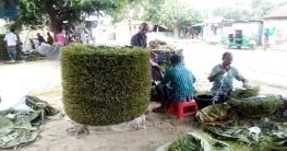 রাজশাহীতে বছরে দেড় হাজার কোটি টাকার অধিক পান কেনাবেচা