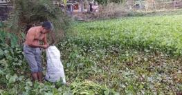 দুর্গাপুরে গো-খাদ্যের সঙ্কট