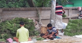 দুর্গাপুরে সজিনার বাম্পার ফলন