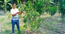 দুর্গাপুরে বাণিজ্যিকভাবে কমলা চাষে সফল কৃষক সাইফুল