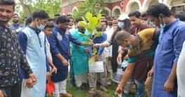 রাজশাহী কলেজ ছাত্রলীগের উদ্যোগে বৃক্ষ রোপন কর্মসূচী পালিত