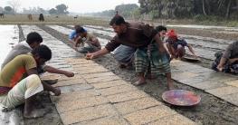 দুর্গাপুরে রাইস ট্রান্সপ্লান্টারে চলছে বোরোর আবাদ