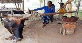 হারিয়ে যাচ্ছে ঘানিতে ভাঙা সরিষার তেল