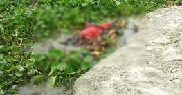রাজশাহীর গোদাগাড়ীর পদ্মায় ভেলাই ভেসে এলো নারীর লাশ