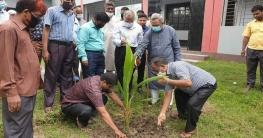 রাজশাহীতে বৃক্ষরোপণ কর্মসূচির উদ্বোধন করলেন এমপি বাদশা