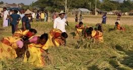 অগ্রাহায়নের প্রথম দিনে গোদাগাড়ীতে নবান্ন উৎসব