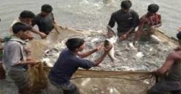 রাজশাহীতে মাছ চাষে ২ লাখ ৮৮ হাজার মানুষের কর্মসংস্থান