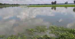 রাজশাহীতে উন্মুক্ত বিলে মাছ চাষে ভাগ্য বদল