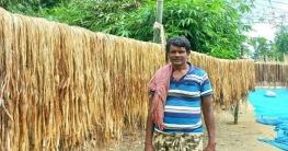 গোদাগাড়ীতে পাটের ভালো ফলন হওয়ায় কৃষকের মুখে হাসির ঝিলিক