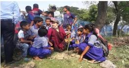 রাজশাহী মোহনপুরে তাল গাছের চারা রোপন