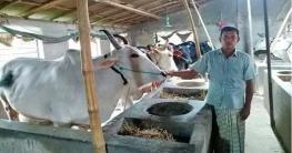 মোহনপুরে করোনায় কোরবানির পশু নিয়ে দুশ্চিন্তায় খামারিরা