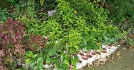 রাজশাহীতে বৃক্ষ মেলা না হওয়ায় নার্সারী খাতে লোকসান আড়াই কোটি টাকা